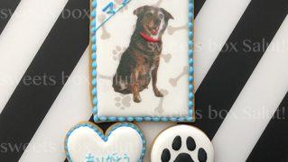 お世話になったお礼に愛犬のアイシングクッキーセット